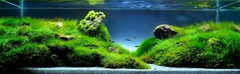 aquascaping-10[2]