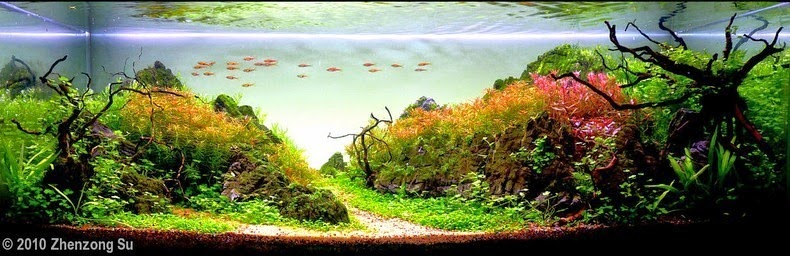 aquascaping-17[2]