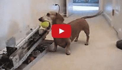 Esto Es Lo Que Ocurre Cuando Un Ingeniero Tiene Un Perro