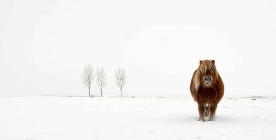 """The cold pony"" de Gert van den Bosch (Holanda) ganó en Naturaleza y Fauna."