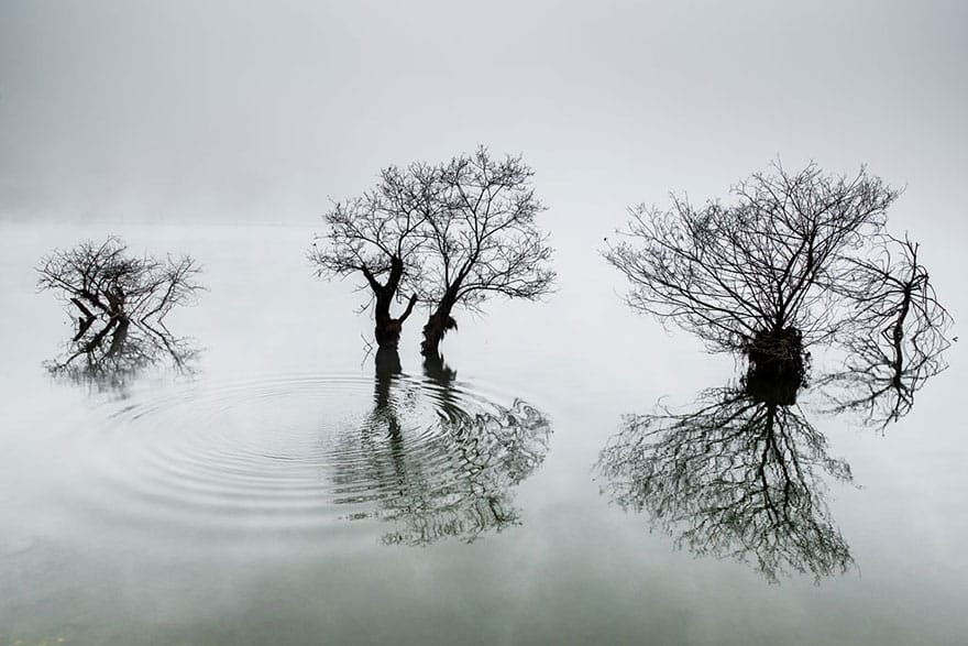"""Premio Nacional de Corea del Sur: """"Ondulaciones en el lago tranquilo"""" Dowon Choi"""