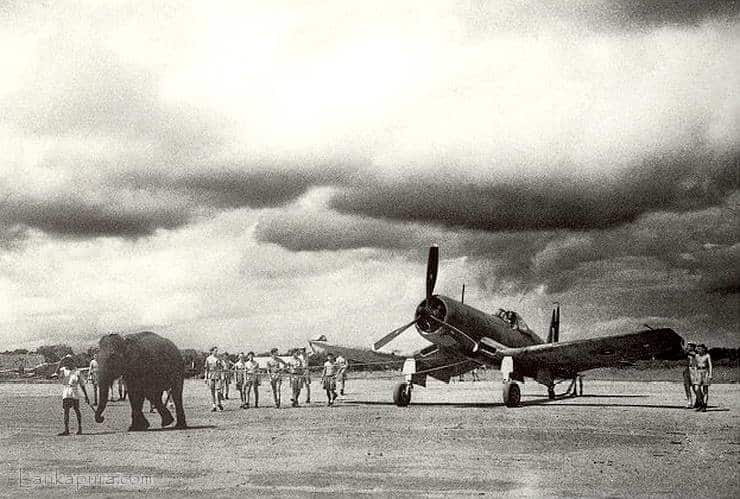An-Elephant-towing-a-Corsair-fighter-aircraft-at-Airfield-in-Sri-Lanka-1944.