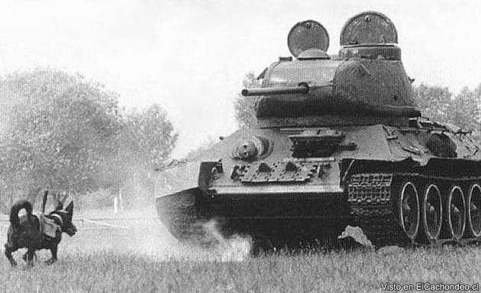 Anti-tank-dogs-used-by-the-Red-Army-were-taught-to-carry-explosives-to-enemy-tanks-at-which-they-would-explode.WW2_
