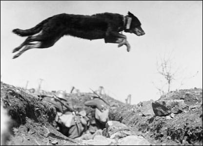 Here-a-German-messenger-dog-leaps-a-trench-on-the-Western-Front-in-1916.