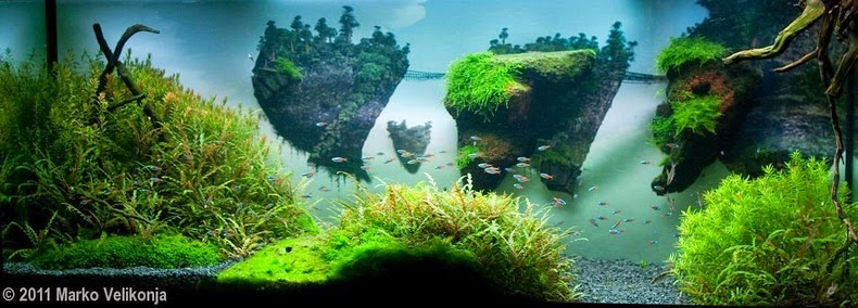aquascaping-14[2]