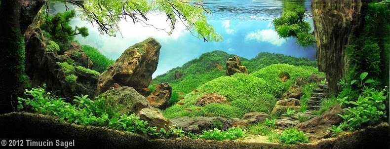 aquascaping-15[2]