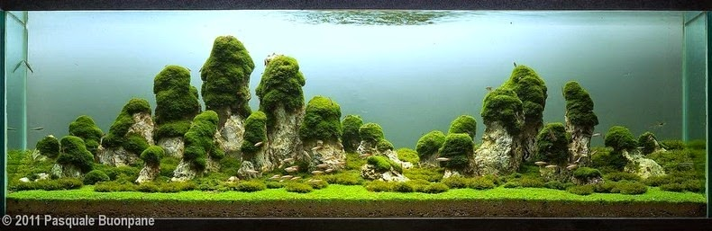aquascaping-16[2]