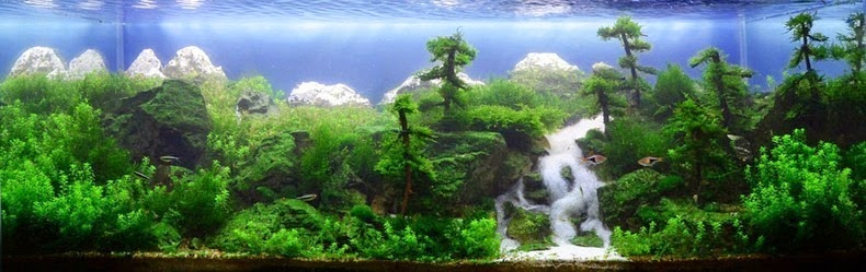 aquascaping-7[2]