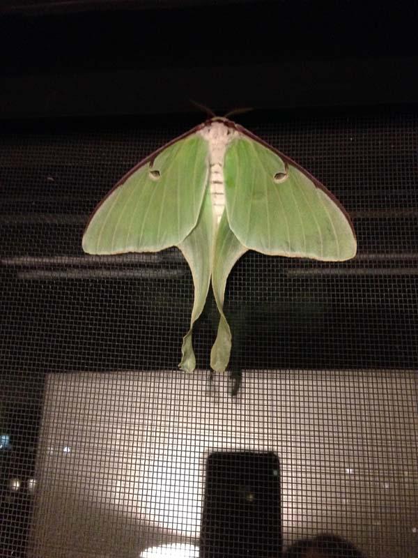 caterpillar5