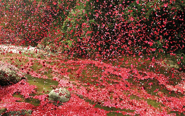 flower-petals7