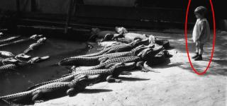 granja de cocodrilos1