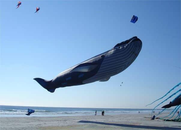 Cometa ballena azul