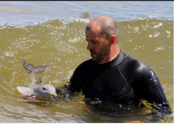 cria delfin