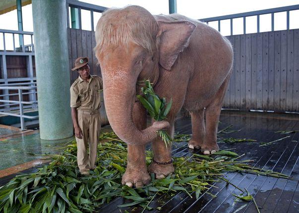 Elefante blanco.