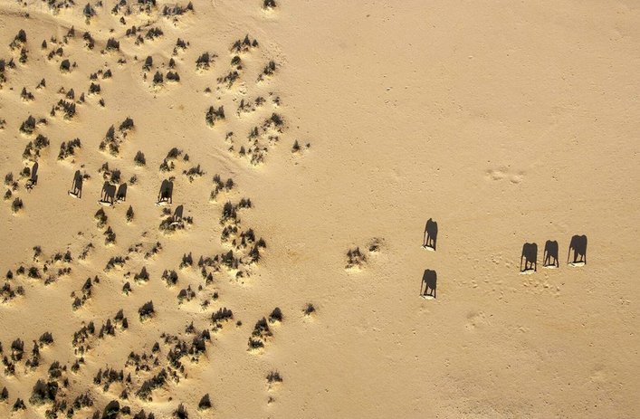 Sombras de elefantes.