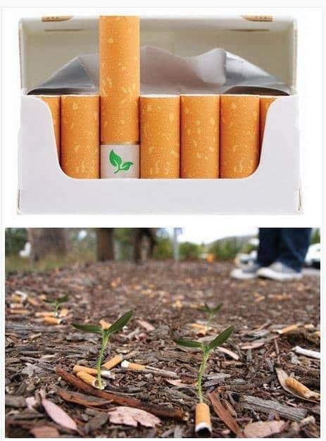 cigarrillos con semillas