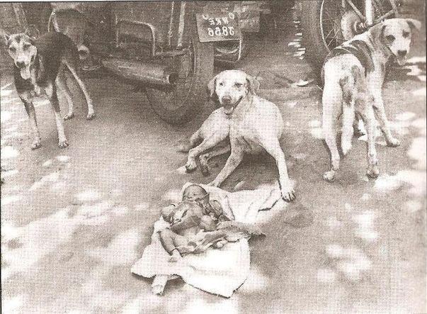 perros y bebe