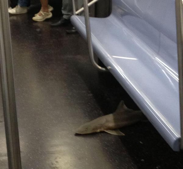 shark-on-the-subway