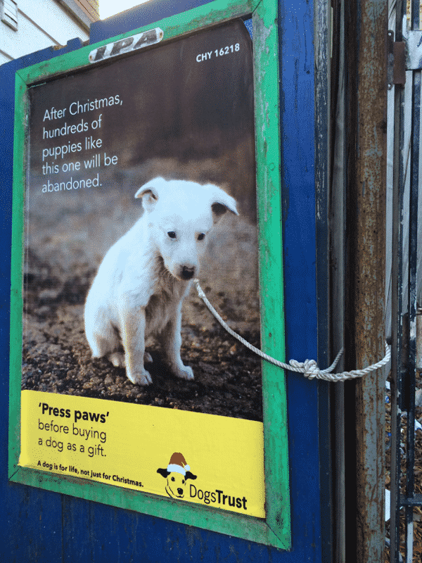 publicidad perros