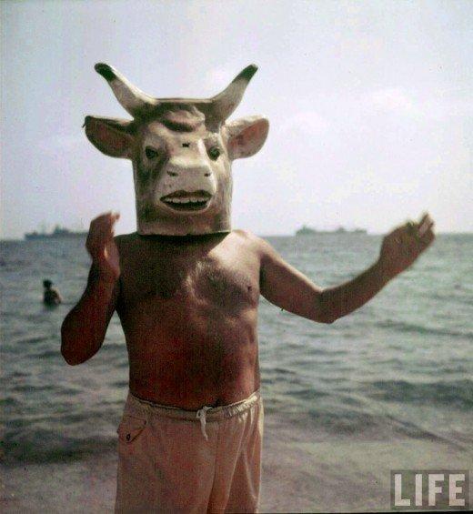 picasso vaca
