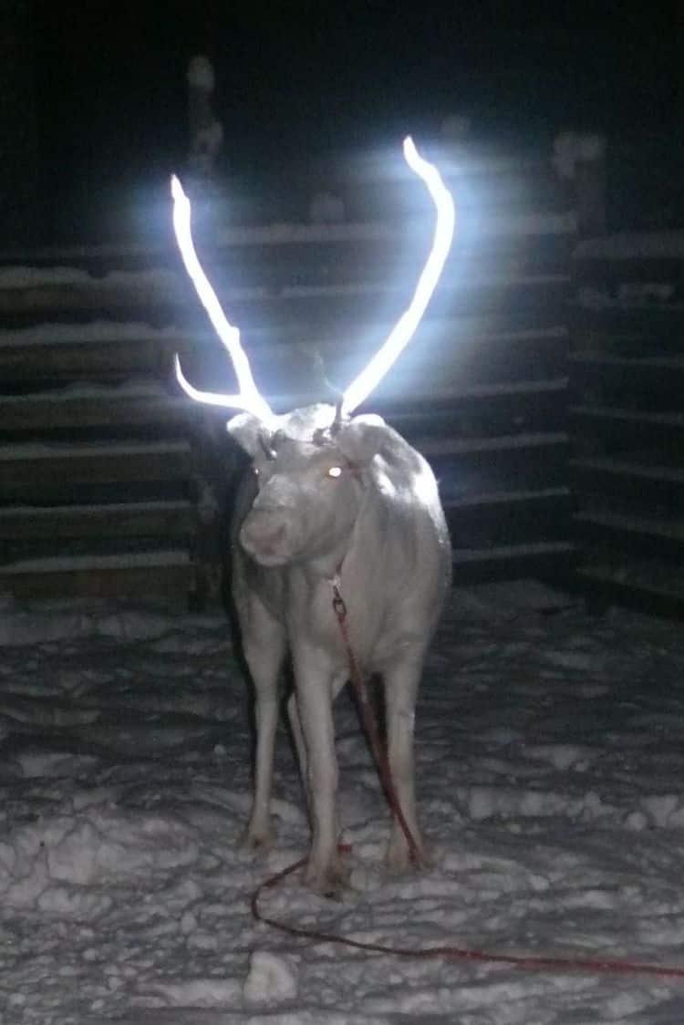 reno finlandia