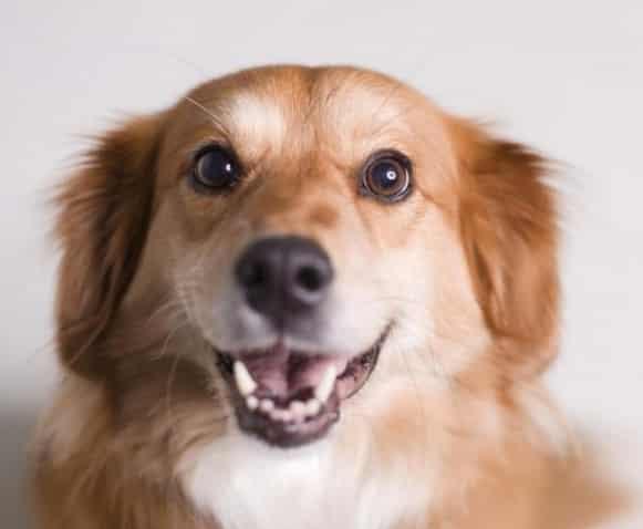 25 curiosidades sobre los perros que quizás desconozcas y que te sorprenderán
