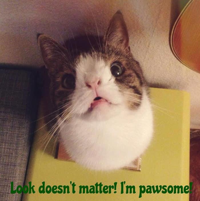 gato-deforme-
