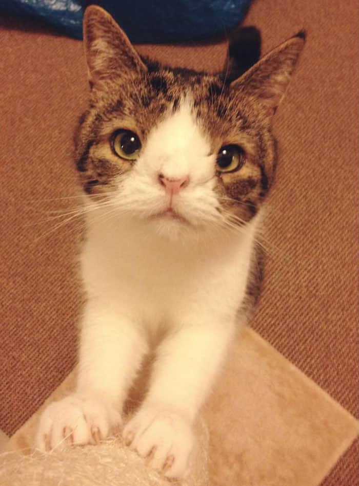 gato-deforme-13