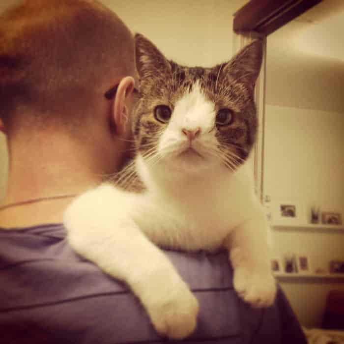 gato-deforme-2