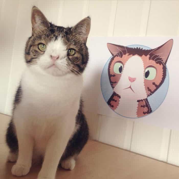 gato-deforme-4