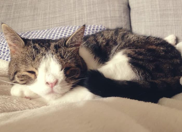gato-deforme-6