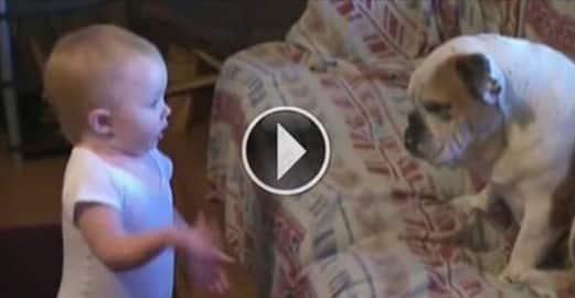 Bebé Y Perro Tienen Una Tierna Y Acalorada Discusión, ¡Me Alegró El Día!