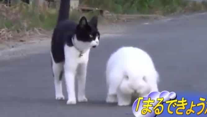 Mira este par de amigos realmente encantadores, se trata de un gato y un dulce conejo!